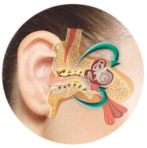 αυτί, ακοή