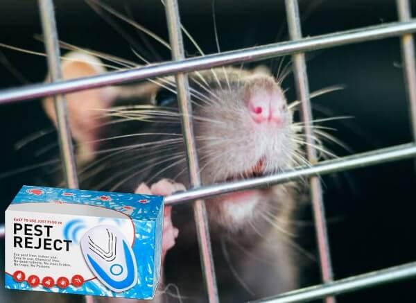 παράσιτα, ποντίκι